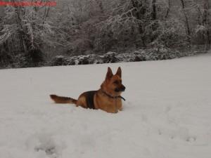 montagna con il cane