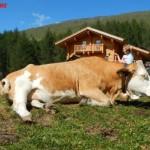 Cinque passeggiate per bambini tra Carinzia e Osttirol