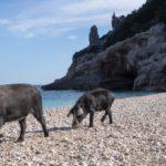 """""""Selvaggio Blu"""" trekking in Sardegna"""