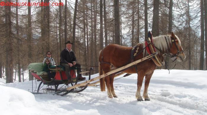 cavallo sulla neve