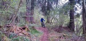 La divertente discesa nel bosco
