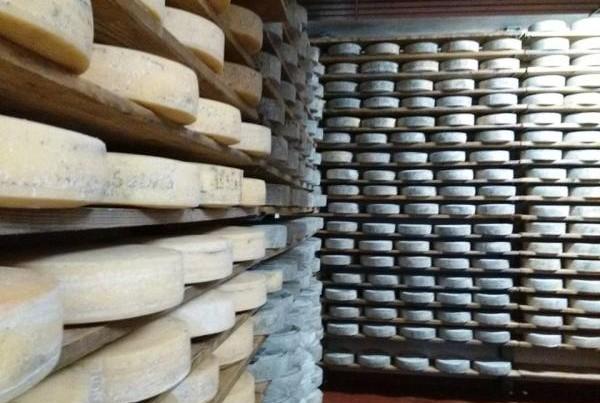 Azienda agricola Val Pesarina: la cantina con i formaggi